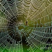 Spider In Web 3 Art Print