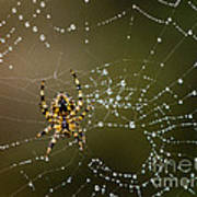 Spider In Web 5 Art Print