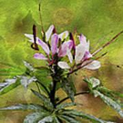 Spider Plant Art Print