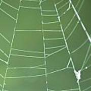 Spiderweb 3 Art Print