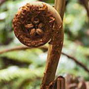 Spiral Tree Fern Art Print