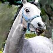 Spirited Grey Horse Art Print