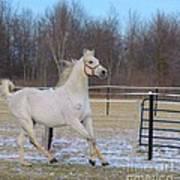 Spirited Horse Art Print