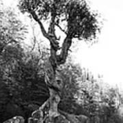 Spirt Tree Art Print