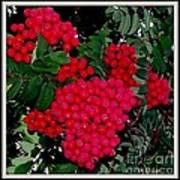 Splash Of Red Berries Art Print