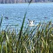 Splashing In The Lake Art Print
