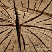 Split Wood Art Print by Art Block Collections