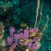 Sponge Condo Art Print