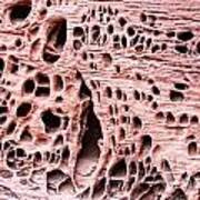 Sponge Rock Art Print