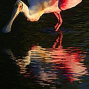 Spoonbill Island Reflection Art Print