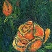 Spotlight Rose Art Print