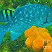 Spotted Surgeon Fish Art Print