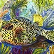 Spotted Trunkfish Art Print