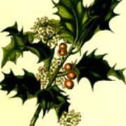 Sprig Of Holly With Berries And Flowers Vintage Poster Art Print