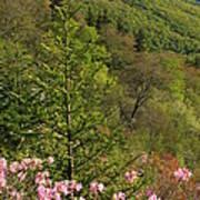 Spring Along The Blue Ridge Art Print