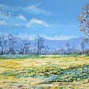 Spring Art Print by Andrei Attila Mezei