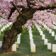 Spring Arives At Arlington National Cemetery Art Print by Susan Candelario