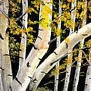 Spring Birch Art Print