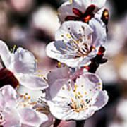 Spring Bloom 3 Art Print