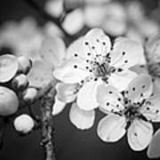 Spring Blooms 6690 Art Print