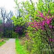 Spring Blooms Along The Path Art Print