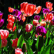 Spring Blossom 5 Art Print