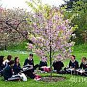Spring Blossom In Kew Gardens London Art Print