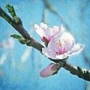 Spring Blossom Art Print