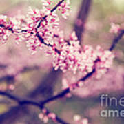 Spring Blossoms II Art Print