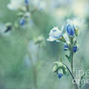 Spring Blues Art Print by Priska Wettstein