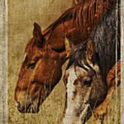 Spring Creek Basin Wild Horses Art Print