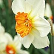 Spring Daffodil Art Print by Cathie Tyler