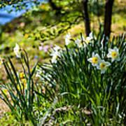 Spring Daffodils.park Keukenhof Art Print