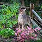 Spring Deer Art Print by Crystal Joy Photography