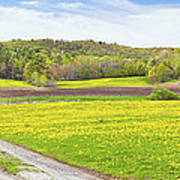 Spring Farm Landscape With Dirt Road And Dandelions Maine Art Print