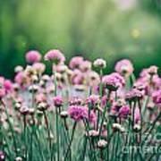 Spring Floral Background Art Print
