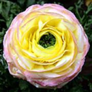 Spring Flower 3 Art Print