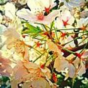 Spring Flowers 27 Art Print