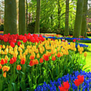 Spring Flowers In A Park Art Print