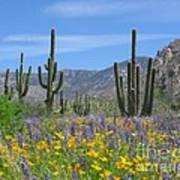 Spring Flowers In The Desert Art Print by Elvira Butler