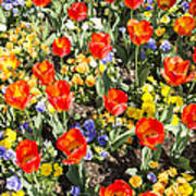 Spring Flowers No. 2 Art Print