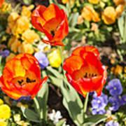 Spring Flowers No. 3 Art Print