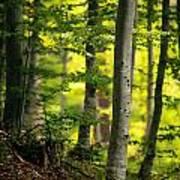 Spring Green Vertical Forest  Art Print