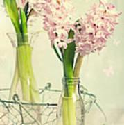 Spring Hyacinths Art Print
