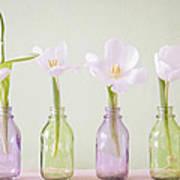 Spring In A Bottle Art Print