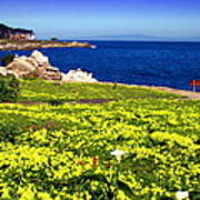Spring In Pacific Grove Ca Art Print