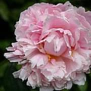 Spring In Pink Art Print