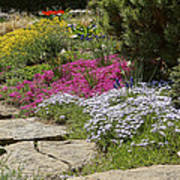 Spring In The Garden Dsc03678 Art Print