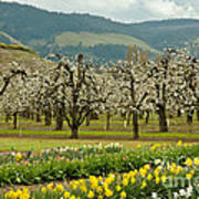Spring In The Hood River Valley Art Print