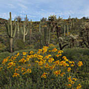 Spring In The Superstition Wilderness Art Print